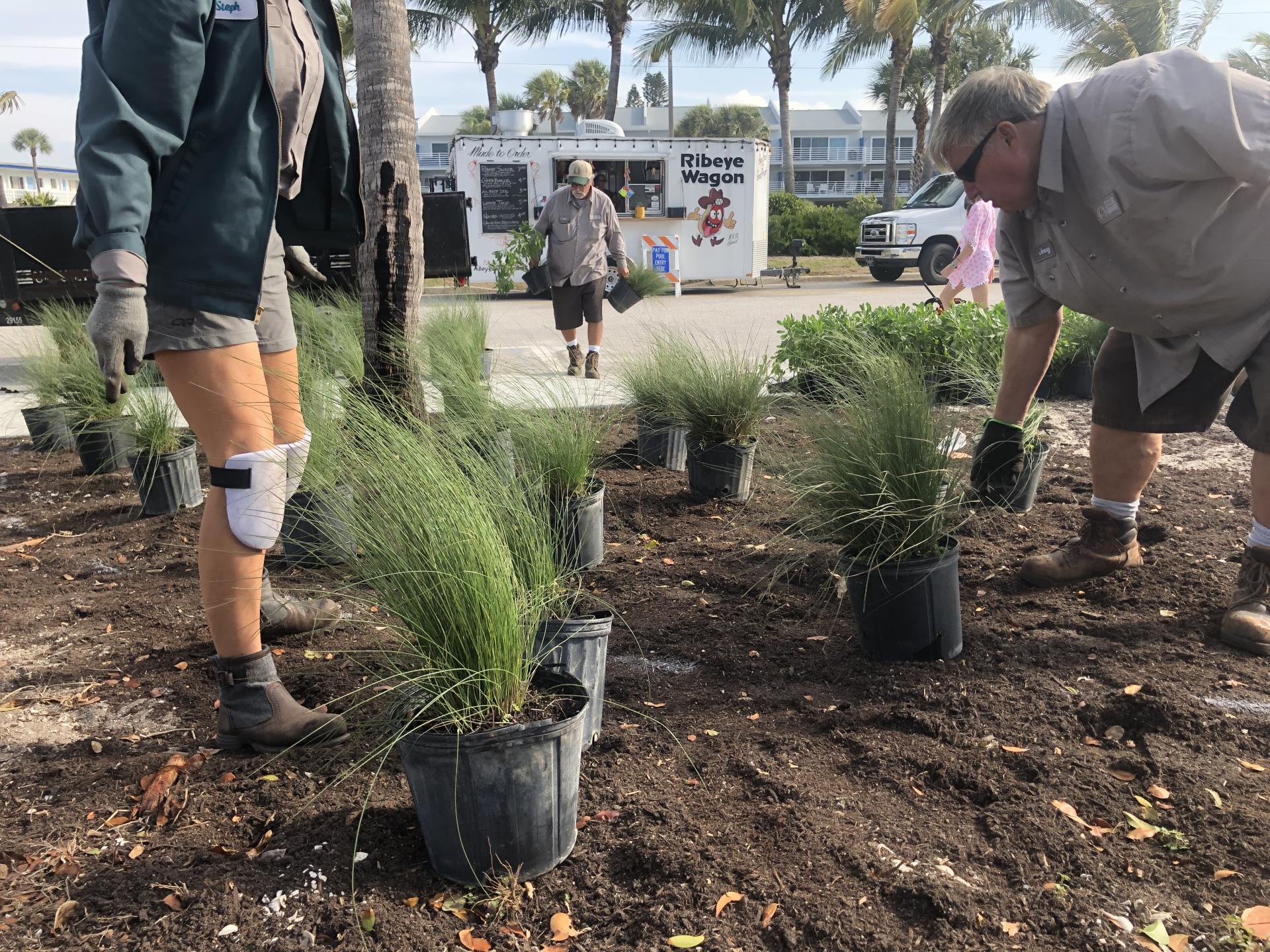 Landscape division planting new plants